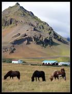 Chevaux Islandais, Arnarstapi