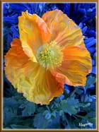 Chou et Fleurs