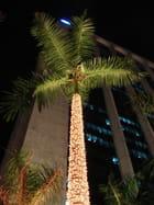 Christmas Pacific Star
