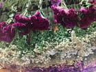 Ciel en fleurs