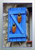 Cigales et volet bleu.