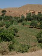 Cigognes dans la vallée du dadès