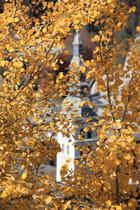 Clocher en automne