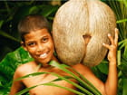 Coco de Mer, la plus grosse noix au monde