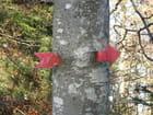 Coeur d'arbre percé d'une flèche