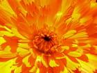 Coeur d'une fleur