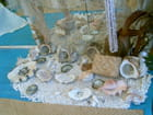 Collection de coquillages de l'île