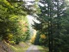 comme une toile.... Forêt de Wisembach