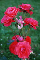 Compsition florale