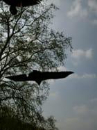 Condor en loir et cher