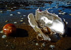Coquillages à marée basse
