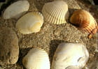 coquillages et sable fin