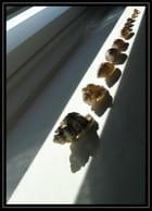 Coquillages illuminés