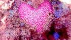 Corail amoureux en inversion de couleur