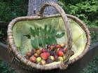 Cormes fruits du cormier