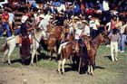 Corraleja fête des cowboys