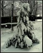 """""""Coube par le poids de la neige""""."""