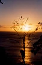 Coucher de soleil et graminée