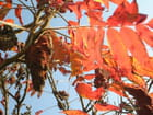 Couleur d\'automne