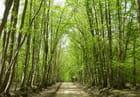 Couleur vert tendre de la forêt