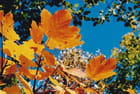 Couleurs chatoyantes d'automne