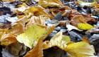 Couleurs d'automne 4