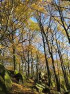 Couleurs d'automne à Uchon