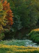Couleurs d'automne et rivière basse