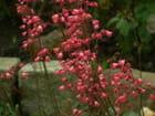 Couleurs, fleurs, printemps