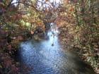 Cours d'eau en automne.