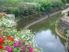 Cours d'eau fleuri