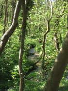 Cours d'eau la Warenne