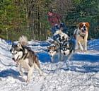 Course de chiens de traîneau