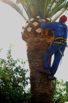Crampons géants pour  grimper aux arbres                                          r