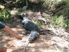 Croc sorti du piège