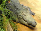 Crocs de crocodiles