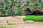Cultures dans le Jebel Akhdar
