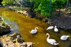 Cygnes du Parc Charruyer