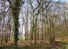 Dans la forêt silencieuse, les arbres dénudés attendent le printemps