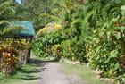 dans la forêt tropicale de la Dominique