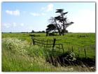 Dans le marais Vendéen...