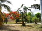 Dans le sud de la Réunion