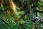 Dans les gorges du Blavet