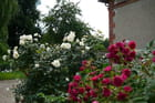 Dans un jardin en Normandie