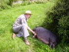 Darkou, cochon vietnamien