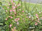 De belles petites fleurs