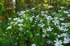 de blanc printemps