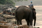 De l'eau pour mon éléphant !