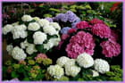 De la couleur dans une jardinerie