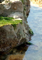De marais en marée
